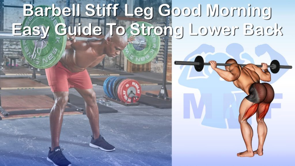 Barbell Stiff Leg Good Morning - Easy Guide To Strong Lower Back