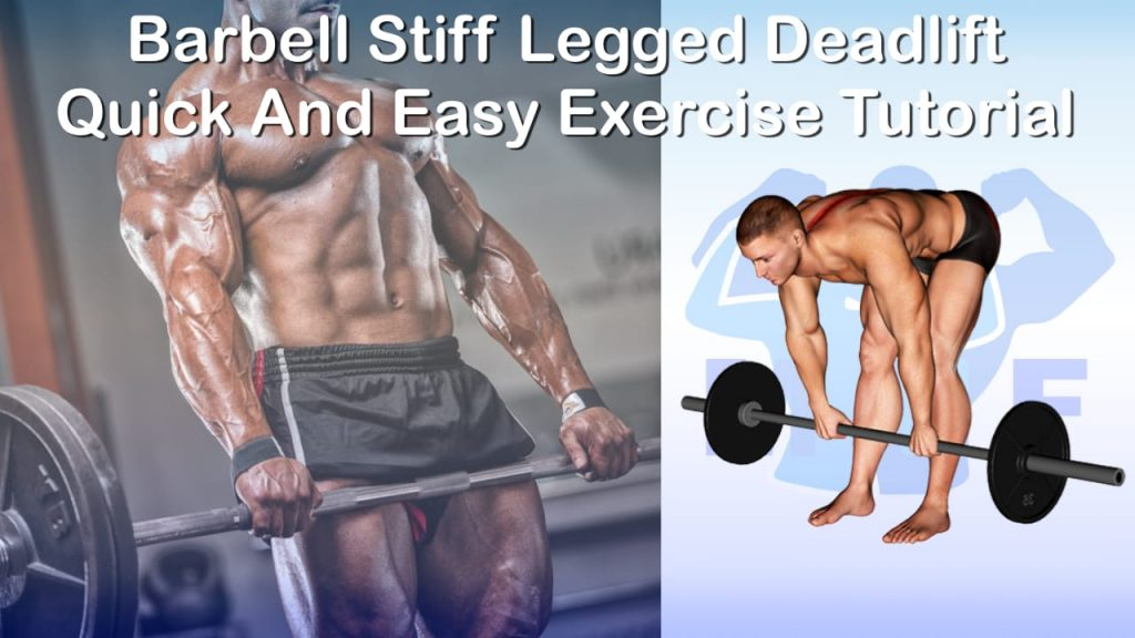 Barbell Stiff Legged Deadlift - Quick And Easy Exercise Tutorial