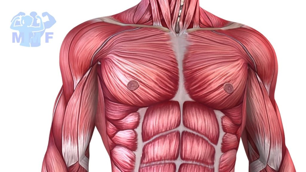 Understanding Your Body - Fast Twitch Vs Slow Twitch Muscle Fibers.